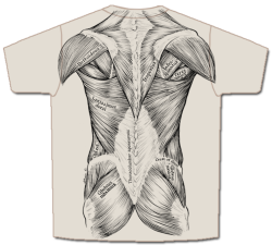 Drawn mussel shirt