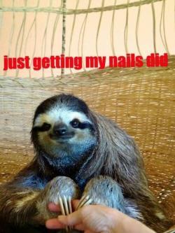 Drawn nail sloth