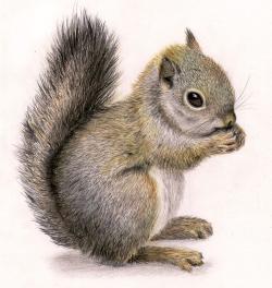 Drawn rodent artwork