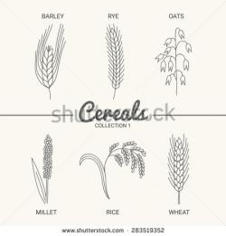 Oat clipart rice crop