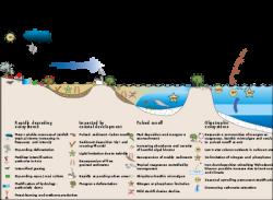 Drawn ocean marine ecosystem