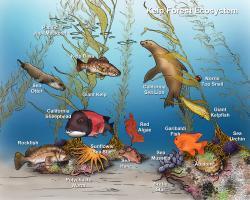 Sea Urchin clipart kelp