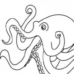 Drawn octopus invertebrate