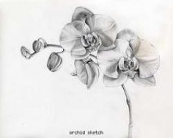Drawn orchid black and white