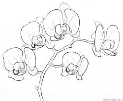 Drawn orchid cartoon