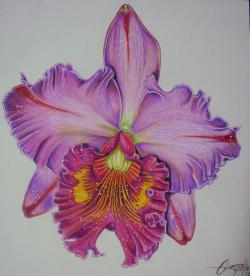Drawn orchid colored