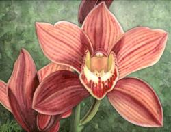 Drawn orchid cymbidium orchid