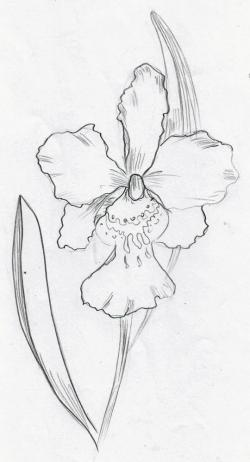 Drawn orchid doodle