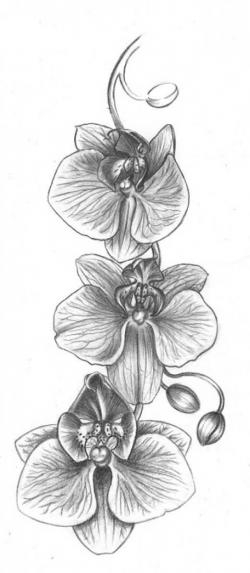 Drawn hummingbird orchid flower