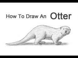 Drawn otter