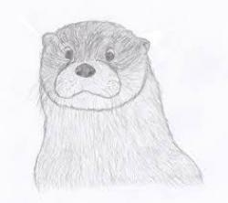 Drawn otter face