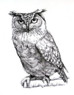Drawn owlet vintage