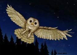 Drawn owlet spotted owl