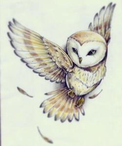 Drawn owl tiny owl