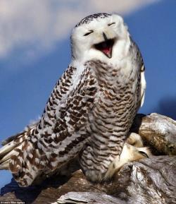 Drawn owl washington state