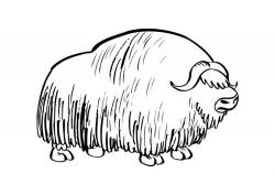 Muskox clipart black and white