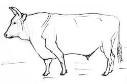 Drawn ox sketch