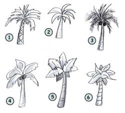 Drawn palm tree