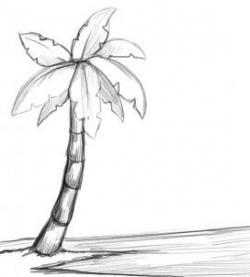 Drawn palm tree pom