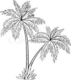 Drawn palm tree tress