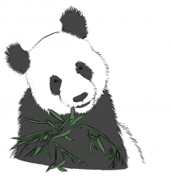 Drawn panda bamboo