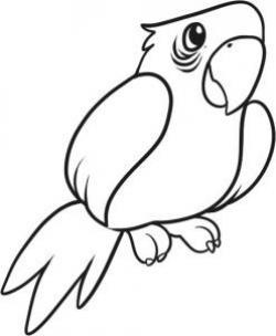 Drawn parrot