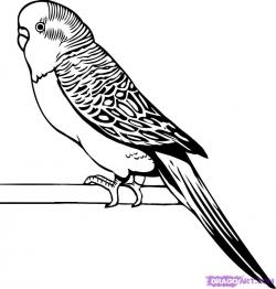 Budgerigars clipart black and white