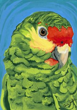Drawn parakeet amazon parrot