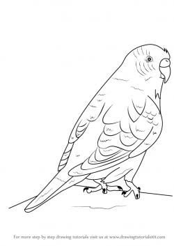Drawn parakeet line drawing