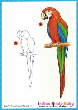 Drawn parakeet simple