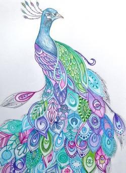 Drawn peafowl colourful