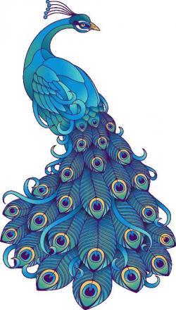 Drawn peafowl artistic
