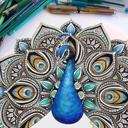 Drawn peacock creative