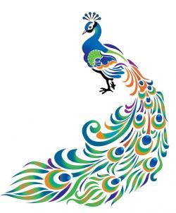 Drawn peafowl peacock feather