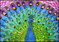 Drawn peacock psychedelic