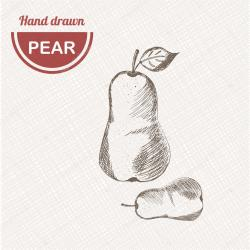 Drawn pear vintage