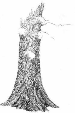 Drawn tree tree trunk