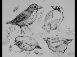 Drawn pen bird