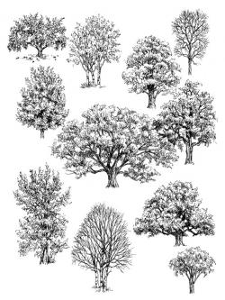 Drawn shrub tree
