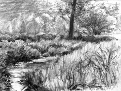 Drawn shrub scenery