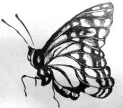 Drawn pen butterfly