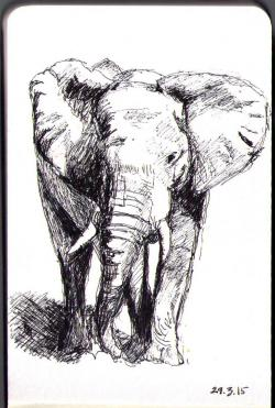 Drawn pen elephant