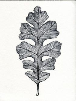 Drawn pen leaf