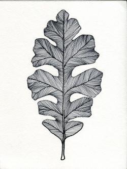 Drawn pen leaf