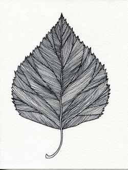 Drawn leaves detailed