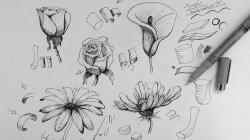 Drawn poppy ballpoint pen