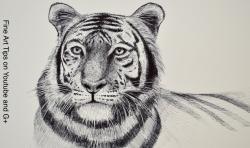 Drawn tiiger pen drawing