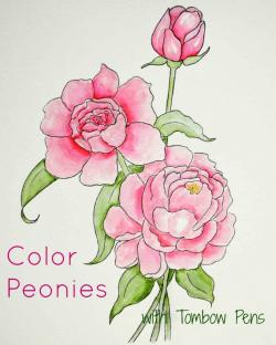 Drawn peony colored