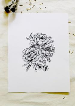 Drawn peony delicate flower