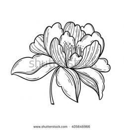 Drawn peony logo